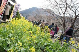 1202_河津ツー_菜の花.JPG